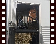 Artie, standing patiently in the trailer.  Rollover to Miles of Smiles smiley.