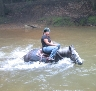 Curly and rider crossing a very deep stream.