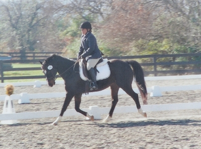 Photo of Handsome during the Dressage phase of the Rubicon Farm Horse Trials.